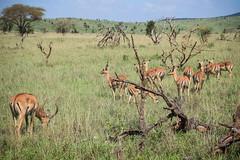Safari (robseye76) Tags: africa park holiday kenya safari national vacations kenia tsavo wakacje afryka