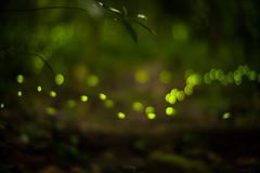 Firefly (Jill-Wang) Tags: leica 50mm bokeh noctilux m9