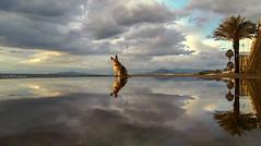Paty y su mirada curiosa (josmanuelvaquera) Tags: agua paty nubes cielos atardeceres mascotas reflejos