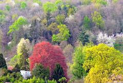 Primavera dalla mia finestra 3 XDSCN5817_02 (papamillo) Tags: trees primavera alberi spring colori forests  campodeifiori  boschi foreste
