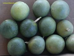 maracujaSilvestreDSC7130 (costapppr) Tags: passiflora passiflorasetaceamaracuj