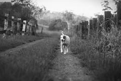 Morning Walk (colin mclellan) Tags: blackandwhite film monochrome analog nikon kodak f100 nikonf100 analogue coffsharbour kentmere kentmere100