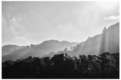 postales bogotanas (Cacto pinhole) Tags: bw digital landscape photography bn cacto fotografa leonardosanchez cactopinhole