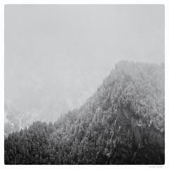 117/366 black white day (tideloon) Tags: winter blackandwhite mountain snow fog april fujifilm konica 135mm entwicklung 2016 hexanon blackwhiteday 366dayproject konicahexanonar135mmf25 fujifilmxt1 366the2016edition 3662016