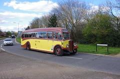 IMGP0095 (Steve Guess) Tags: uk england bus museum surrey motors gb cobham regal weybridge brooklands aec byfleet