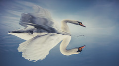 Walk beside me just be my friend... (Bhalalhaika) Tags: ocean blue white reflection bird water oslo norway swan fjord inverted fornebu flipped muteswan fornebo