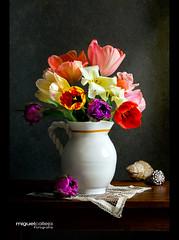 TULIPANES (Miguel Calleja) Tags: stilllife flower fleur flor bodegn tulip bouquet ramo tulipe naturemorte naturamorta tulipn tulipanes