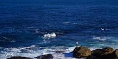 Rock Fishing (milo J) Tags: ocean blue sea fish nature fishing outdoor sydney australia clovelly