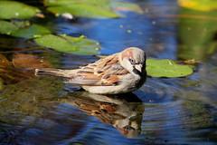 IMG_0707 (eve_manning) Tags: park autumn newzealand auckland domain