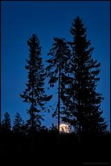 Moonrise (Jonas Thomn) Tags: trees moon night dark evening moonrise natt trd mnen kvll mrkt mnuppgng