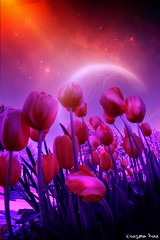 Another World... (gusdiaz) Tags: flowers flores art primavera digital photoshop stars photo spring amazing tulips space manipulation estrellas planet colorido planetas