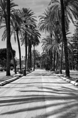 treeline IV   palma de mallorca (John FotoHouse) Tags: trees blackandwhite bw palms flickr fuji shadows johndolan palmademallorca balearicislands 2016 dolan leedsflickrgroup johnfotohouse copyrightjdolan fujifilmx100s