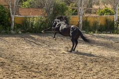 Alhaurn El Grande (Pieter Mooij) Tags: andaluca es spanje alhaurnelgrande