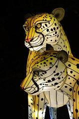 Cheetah Lanterns (pokoroto) Tags: autumn canada calgary night zoo october alberta lanterns cheetah 10 2015     kannazuki   themonthwhentherearenogods 27