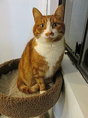 Penny – 7 year old spayed female