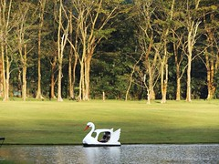 Nature and The Artificial (chethaka) Tags: trees wet sunshine garden relax botanical swan tank botanicalgarden swanboat zone swanride wetzone eveninf puwakpitiya seethawaka thummodara seethawakabotanicalgarden
