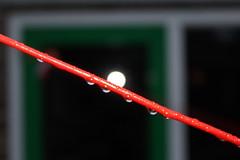 Clothesline (Davydutchy) Tags: water rain wire wasser pluie drop line clothesline washing regen tried tropfen kabel druppel waslijn draad droppel wskline
