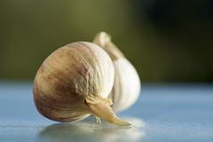 HMM!! Garlic (Elisafox22) Tags: light shadow macro texture glass lens skin sony garlic hmm base sprouting 100mmf28 macromondays elisafox22 ilca77m2 elisaliddell2016