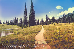 Path~Tipsoo Lake Mt Rainier (thomask8) Tags: flowers trees summer sky plants lake mountains flower color tree nature water floral field clouds forest canon outdoors photography washington pond colorful path ngc hike mtrainier onawalk naturescenes leadinglines skynature tipsoolake