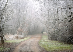 Fairytale Winter ... (MargoLuc) Tags: trees winter light white man cold leaves mystery walking landscape frozen scenery soft mood path frosty days destiny dreamy magical