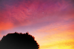 Dawn and moon (Fabianni Luiz) Tags: morning sky sun moon tree colors sunrise cores landscape dawn cu together amanhecer