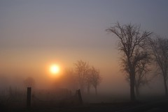 Trees in the mist (Tobi_2008) Tags: trees sun mist nature fog sunrise germany landscape deutschland nebel saxony natur arbres sachsen landschaft sonne bume sonnenaufgang allemagne germania