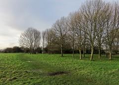 Hob Moor, January 2016 (nican45) Tags: york winter tree green canon yorkshire january powershot 2016 hobmoor sx700hs 10012016 10january2016
