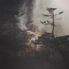 #Sandakphu , #Darjeeling , #Cloudy , #Weather , #Foggy, #Trail, #Explore , #Himalayas, #Kangchenjunga , #Peak, #Trekking , #India, #Nepal, #Visualsoflife (rammahajan7) Tags: nepal india weather trekking cloudy foggy peak explore trail darjeeling himalayas sandakphu kangchenjunga visualsoflife