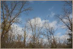 \\\ Passage du Autumne /// (Wolverine09J ~ 1 Million + Views) Tags: nature landscape magiceye barebranches treesonsky thebeautyofnature waningautumn spiritofphotography dragonflyawards rumrivercentral