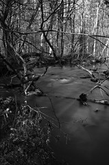 New Hope Creek (F. Neil S.) Tags: winter monochrome creek blackwhite woods tripod timeexposure blancetnoir ndfilter 10stopfilter nex6