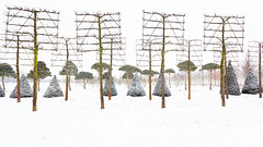 Natures Freedom - A Choreography with Trees (panfot_O (Bernd Walz)) Tags: trees color tree rural landscape countryside order farm fineart colorized agriculture shape treefarm treenursing