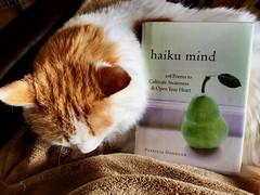 Reading with cats ~ #lifewithcats #readingwithcats #Cat #haiku #books (Ben Moeller-Gaa) Tags: cat haiku books readingwithcats lifewithcats