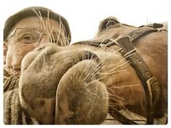 Gezellig Saampjes (gill4kleuren - 12 ml views) Tags: life horse me sarah fun outside happy lol running anisa saar paard haflinger hengst