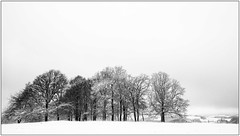 Landscape with snow #10 - From near to far (Wayne Interessiert's) Tags: schnee trees sky white snow black monochrome field landscape weide feld hills berge ciel sw neige prairie paysage landschaft campagne bume arbre sauerland bosquet smallwood sauve saule himme wldchen