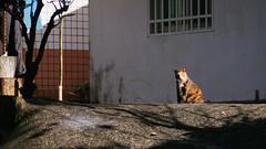 P2081867 (Kyatto) Tags: cat taiwan olympus kit   m43 em10  40150mm