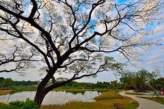 DSC_4531 (david linson) Tags: trees beautiful taiwan
