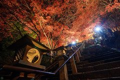 20151120-DS7_9865.jpg (d3_plus) Tags: street autumn autumnfoliage sky mountain fall japan trekking temple nikon scenery nightshot wideangle autumnleaves  nightview       oyama touring  thesedays superwideangle        tamron1735  a05  tamronspaf1735mmf284dildasphericalif tamronspaf1735mmf284dildaspherical d700 kanagawapref  nikond700 tamronspaf1735mmf284dild tamronspaf1735mmf284