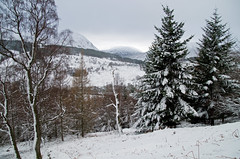 Wintry Woodland (eric robb niven) Tags: walking scotland dundee outdoor perthshire winterspring glenlyon winterwatch weirdwinter ericrobbniven