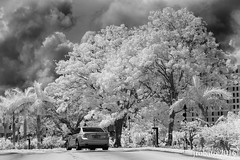 Driveway In B&W Infrared (orgazmo) Tags: trees monochrome ir outdoors lumix blackwhite olympus panasonic infrared guam irphotography m43 infraredphotography micro43s m43s epl2 penepl2 lumixgxvario35100mmf28