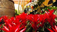 Bellagio_Chinese New Year 1-8 (Swallia23) Tags: las vegas flowers money hotel peach chinesenewyear casio nv bellagio yearofthemonkey 2016 conservatorybotanicalgarden