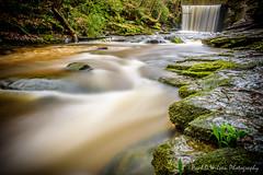 Nant Mill Wood. Feb 2016-19-6.jpg (revpdwilson) Tags: water wales landscape waterfall naturallight slowshutterspeed northwales nikon28300mmvr nikond750 lightroom6 nantmillwood
