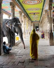 Mangal and the Lady (Shrimaitreya) Tags: elephant lady temple colorful god religion hindu hinduism sari tamilnadu southindia kumbakonam
