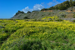 California Coast (bighornplateau1) Tags: california flowers coast bigsur highway1 2016