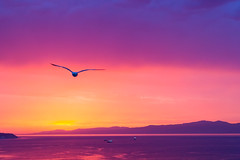 Vuelo (Pirata Larios) Tags: sunset sea sky costa sun bird textura sol azul clouds canon atardecer coast harbor mar flying barco purple seagull paisaje ave cielo nubes pajaro naranja junio vuelo 2014 morado volar 60d carloslarios
