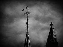 Church tower (g.rokke) Tags: tower church birds norway norge cross cathedral toren vogels churchtower trondheim sørtrøndelag kerk fugler tårn kirke noorwegen domkirka kruis kors kerktoren trøndelag katedral spir kirketårn