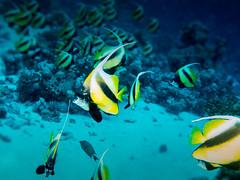 IMG_0427 (eye[4]eye) Tags: egypt diving gypten tauchen bluewaves