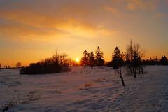 Fagnes - 07 - Sunny is leaving (Ld\/) Tags: winter sunset orange sun snow jaune soleil belgium belgique belgie ardennen ardennes coucher sunny eifel venn hoge malmedy hautes fagnes malmdy ardenne hohes waimes jalhay