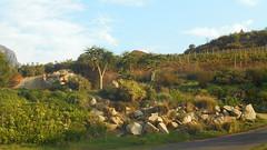 Rock Garden (RobW_) Tags: rock garden southafrica march saturday stellenbosch westerncape 2016 05mar2016