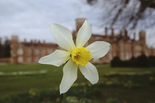 20160403_6706 Cobham Hall daffodill