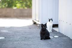 (23fumi) Tags: street cat nikon dof bokeh 85mm   d600  afs85mmf18g